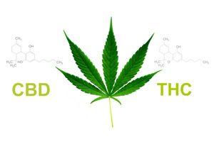 THC et le CBD